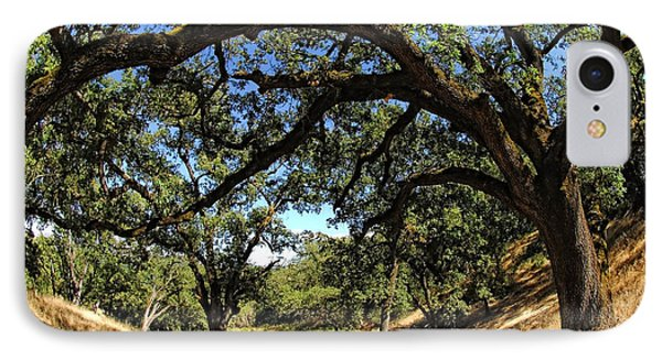 Under The Oak Canopy Phone Case by Donna Blackhall