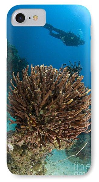 Unidentified Species Of Sponge Phone Case by Steve Jones