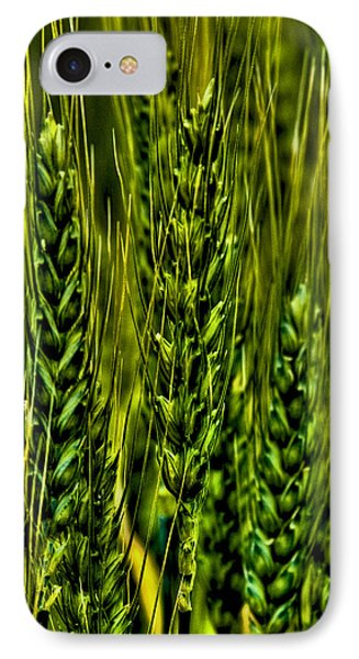 Unripened Wheat IPhone Case by David Patterson