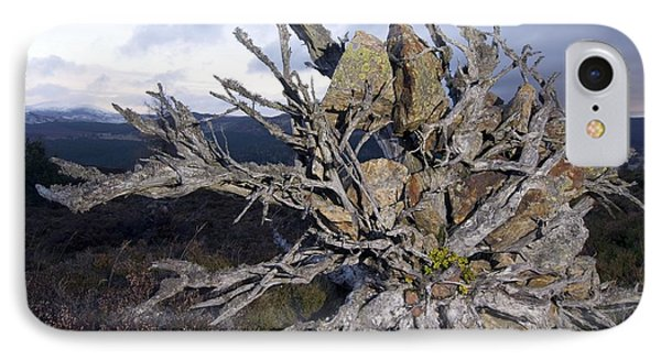 Uprooted Scot's Pine Tree Phone Case by Duncan Shaw