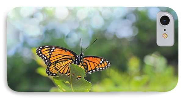 Viceroy Butterfly Limenitis Archippus  IPhone Case by Marianne Campolongo