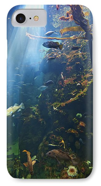 View Of Fish In An Aquarium In The San Phone Case by Laura Ciapponi