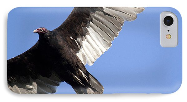 Vulture IPhone Case by Jeannette Hunt