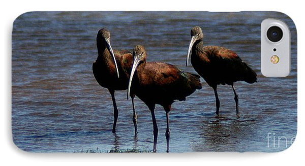 IPhone Case featuring the photograph Waiding Ibis by Mitch Shindelbower
