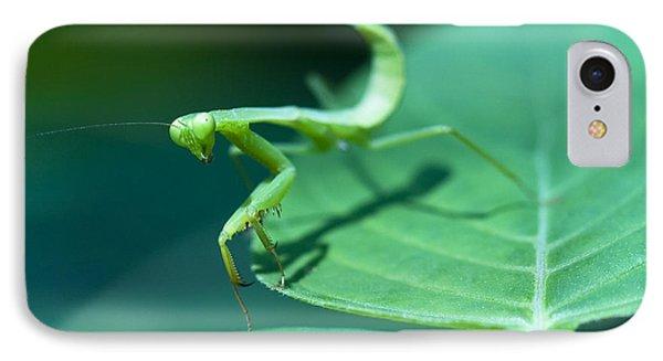 Walking Mantis IPhone Case by Zoe Ferrie