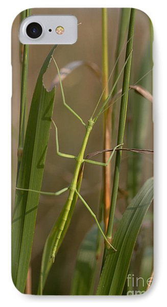Walking Stick Insect Phone Case by Ted Kinsman