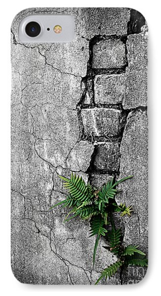 Wall Ferns Phone Case by Perry Webster