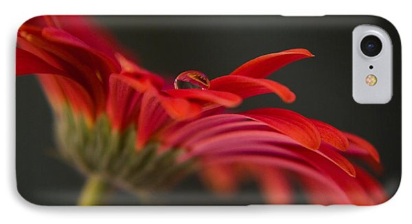 Water Drop On A Red Gerbera Flower Phone Case by Pixie Copley