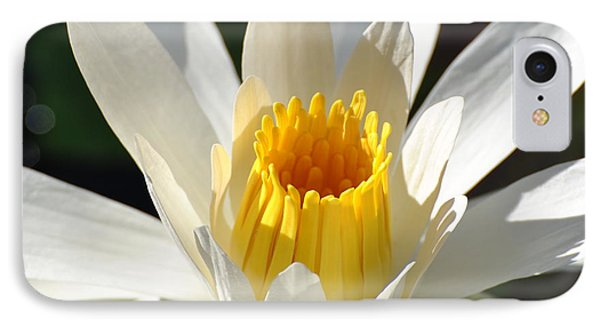 IPhone Case featuring the photograph Water Lilly by Jodi Terracina
