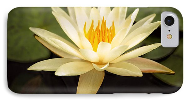 Water Lily IPhone Case by Darren Fisher