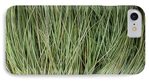 Weeping Sedge (carex Oshimensis) Phone Case by Archie Young