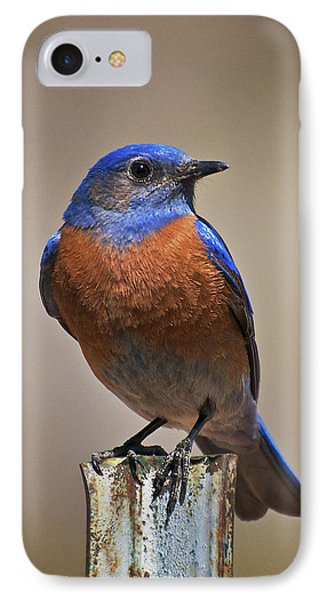IPhone Case featuring the photograph Western Bluebird by Britt Runyon