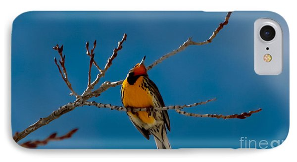 Meadowlark iPhone 7 Case - Western Meadowlark by Mitch Shindelbower