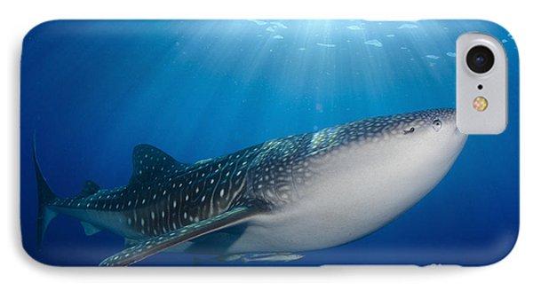 Whale Shark Feeding Under Fishing Phone Case by Steve Jones