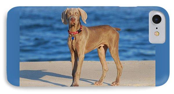 What - Weimaraner Puppy IPhone Case