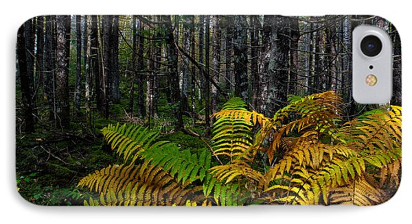 Where The Ferns Grow IPhone Case by Ronald Lutz