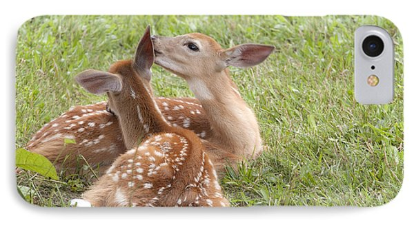 Whispering Fawns IPhone Case by Jeannette Hunt