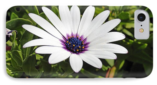 White African Daisy Phone Case by Robert Meyers-Lussier