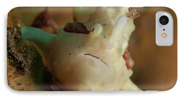 White And Red Clown Frogfish, Bali Phone Case by Mathieu Meur