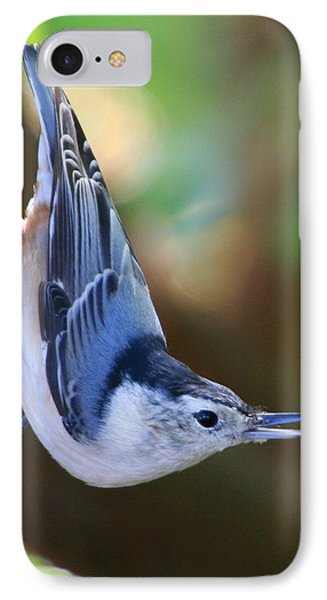 IPhone Case featuring the photograph White-breasted Nuthatch by Laurel Talabere
