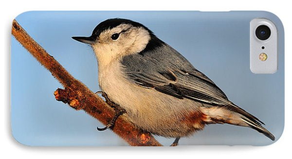 White-breasted Nuthatch Phone Case by Tony Beck
