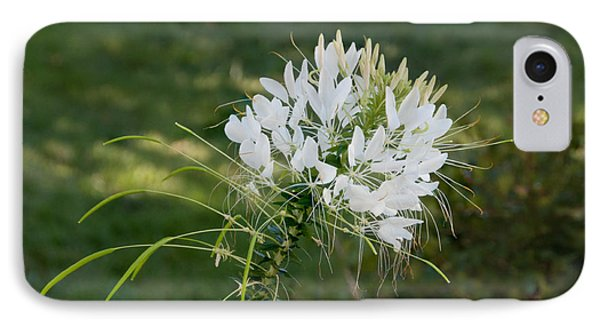 White Cleome IPhone Case by Michael Bessler