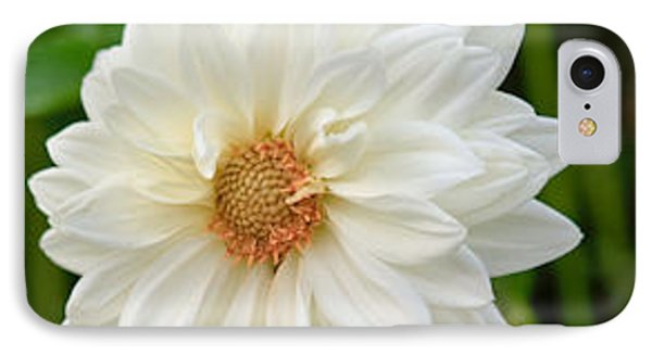 IPhone Case featuring the photograph White Dahlia by Ann Murphy