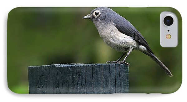 White-eyed Slaty Flycatcher IPhone Case by Tony Beck