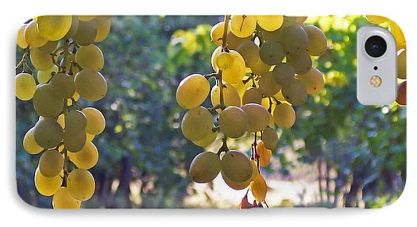 White Grapes Phone Case by Barbara McMahon
