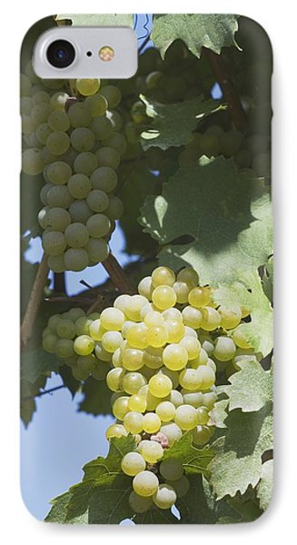 White Grapes On The Vine Phone Case by Michael Interisano