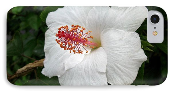 IPhone Case featuring the photograph White Hibiscus by Carol Sweetwood