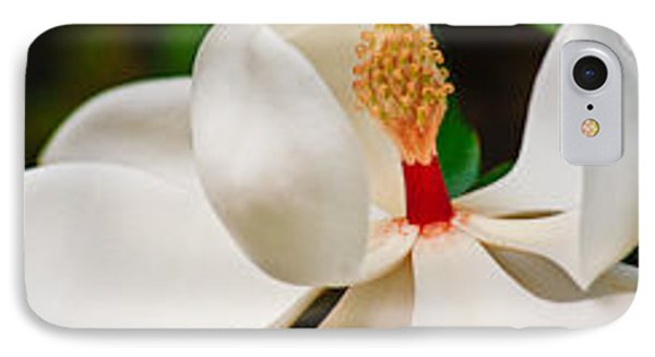 IPhone Case featuring the photograph White Magnolia by Ann Murphy