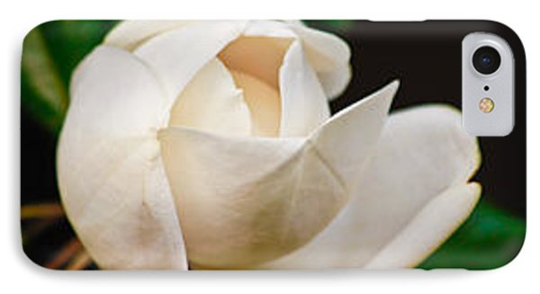 IPhone Case featuring the photograph White Magnolia Unfolding by Ann Murphy