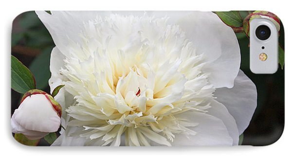 IPhone Case featuring the photograph White Peony by Ann Murphy