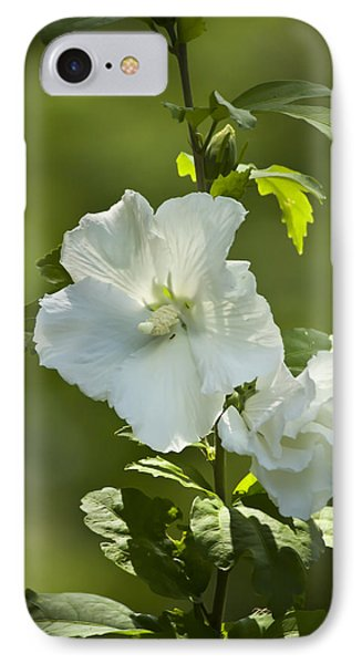 White Rose Of Sharon IPhone Case