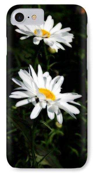 White Shasta Daisies Phone Case by Kay Novy