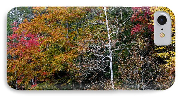 White Tree Fall Colors  Phone Case by Rich Franco