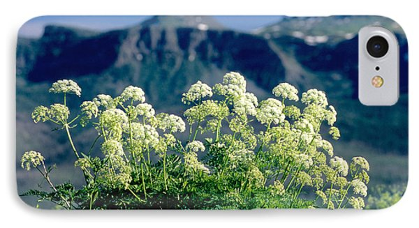 Wild Angelica Phone Case by James Steinberg and Photo Researchers