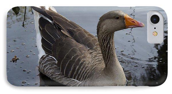 Wild Greylag Goose IPhone Case by Lynn Palmer