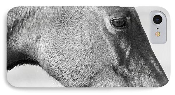 Wild Horse Intimate IPhone Case by Bob Decker