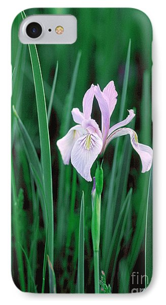 IPhone Case featuring the photograph Wild Iris by Doug Herr
