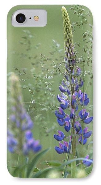 Wild Lupine Flower IPhone Case