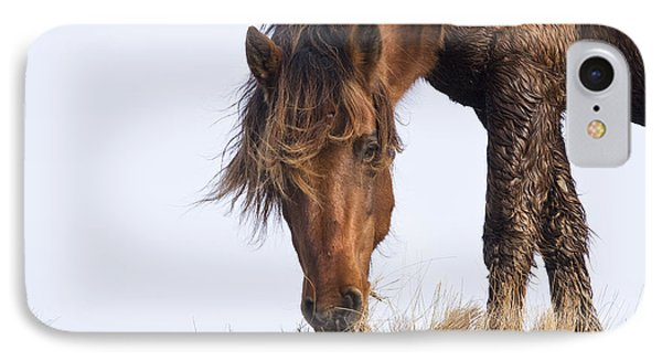 Wildhorse On The High Dunes IPhone Case by Bob Decker