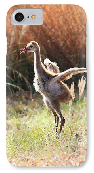Fluffy Sandhill Crane Baby IPhone Case by Carol Groenen