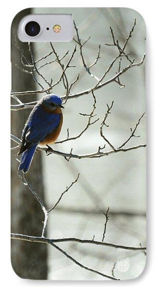 Winter Bluebird Phone Case by Rebecca Sherman