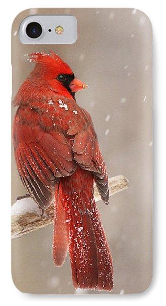 Winter Cardinal  IPhone Case by Mircea Costina Photography