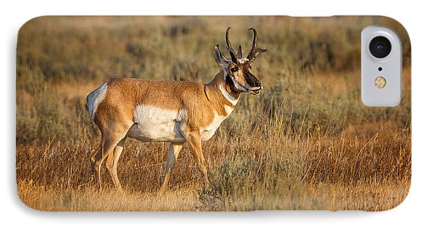 Wyoming Pronghorn IPhone Case by Ronald Lutz