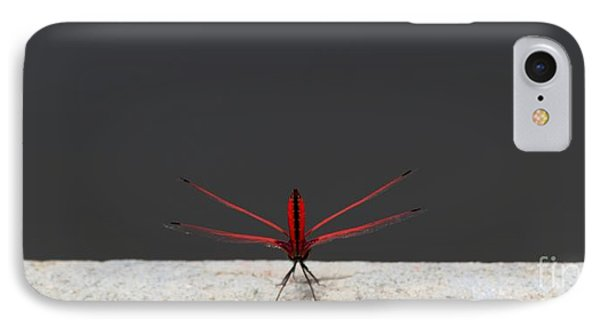 IPhone Case featuring the photograph X Wing Dragonfly by Nola Lee Kelsey