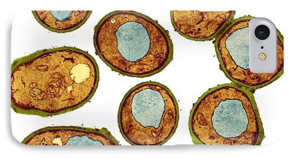 Yeast Cells, Tem Phone Case by Thomas Deerinck, Ncmir