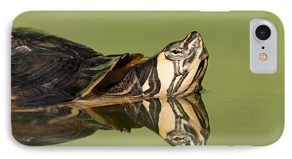 Yellow-bellied Slider Trachemys Scripta Phone Case by Ingo Arndt